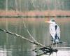 fishingprophet