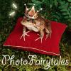 PhotoFairytales